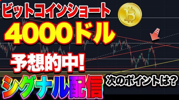 【仮想通貨】BTCショート完全的中!爆益シグナル配信!ENJコインは買いチャンス?自動売買システムは勝手に5万円増えてました!