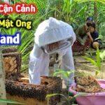 Cận Cảnh Lấy Mật Ong Ở Thailand, Duy Bị Bày Ong Đốt Lên Bờ Xuống Ruộng   Duy Nan #47