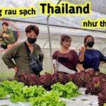 Khám Phá Vườn Rau Sạch Ở Thái, Mua Rau Sạch Về Ăn Mũ Cà Thá | Duy Nan #48